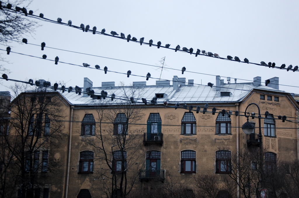 Дом Лидваля на Каменноостровском