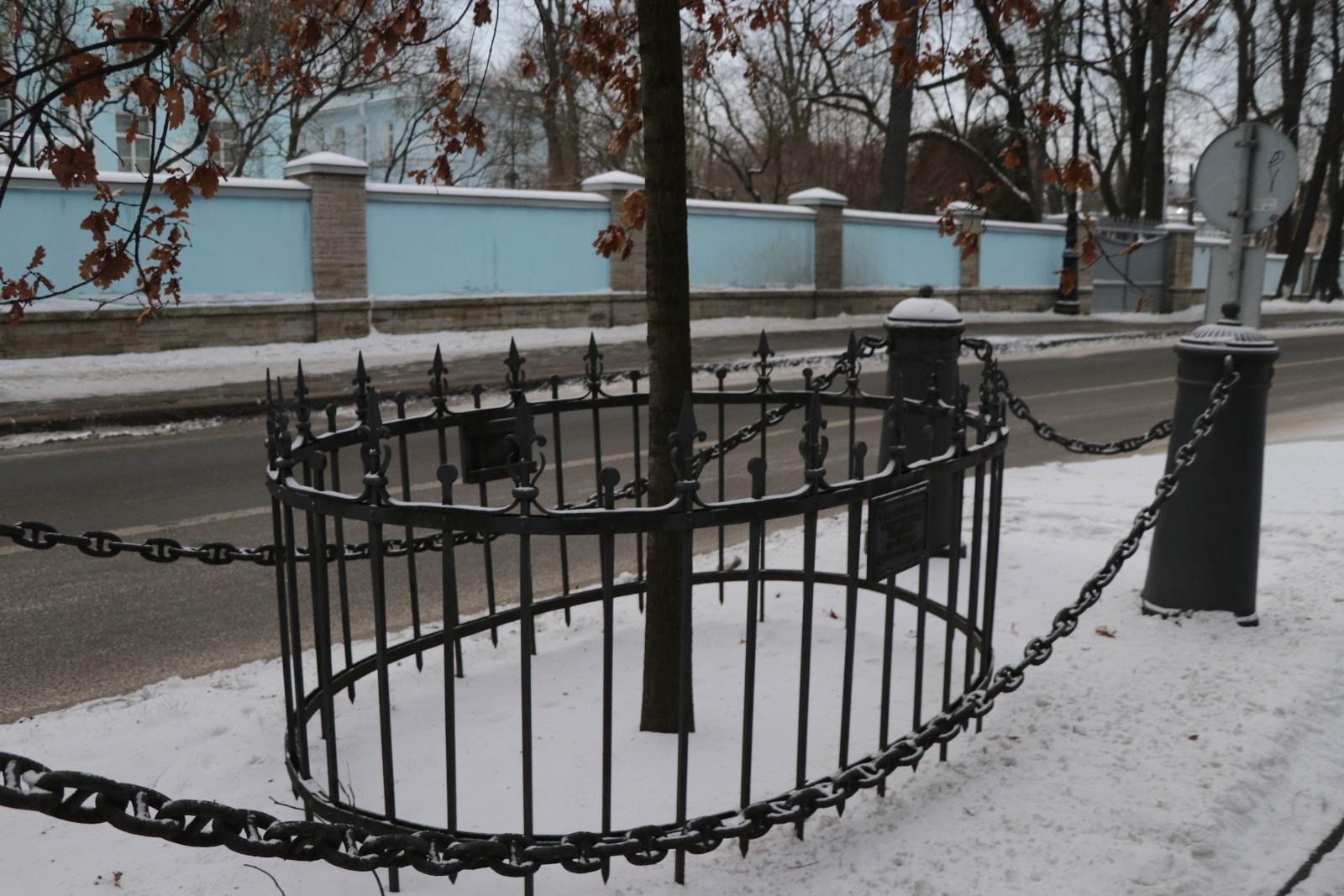 Дуб Петра ограда